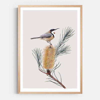 Print Workshop, Framed Print, Eastern Spinebill , Natural Australian Oak Box Frame with White Border