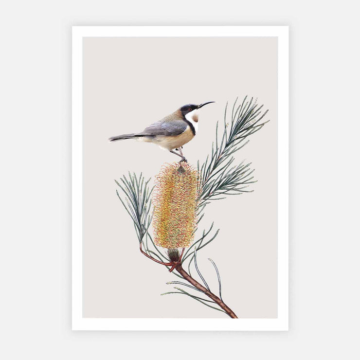 Print Workshop, Eastern Spinebill, Print Only No Frame with White Border