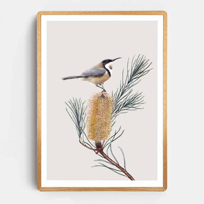 Print Workshop, Framed Print, Eastern Spinebill, Rounded Corner Natural Oak Box Frame, Light Oak Stain with White Border