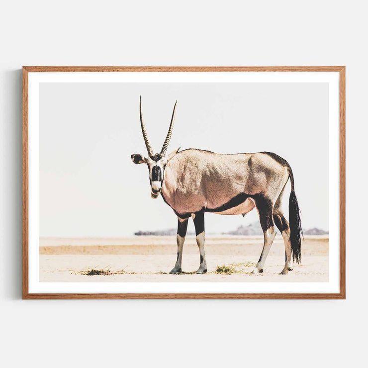 Print Workshop, Framed Print, Oryx, Natural Oak Box Frame, Chestnut Stain with White Border