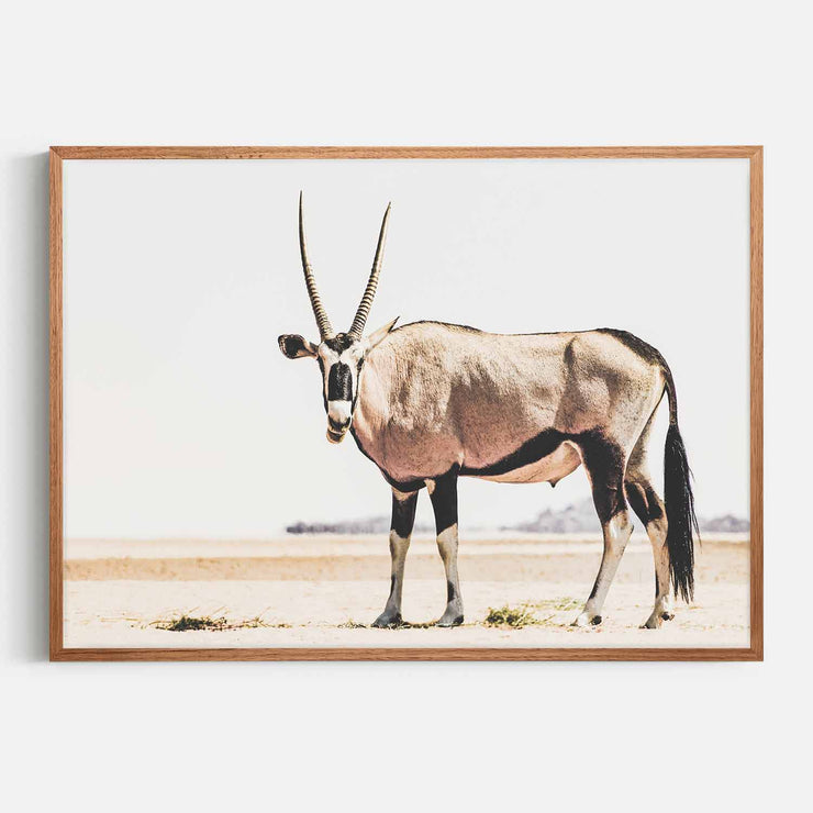 Print Workshop, Framed Print, Oryx, Natural Oak Box Frame, Chestnut Stain, No White Border