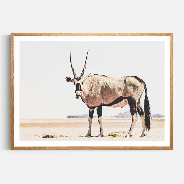Print Workshop, Framed Print, Oryx, Natural Oak Box Frame, Light Oak Stain with White Border