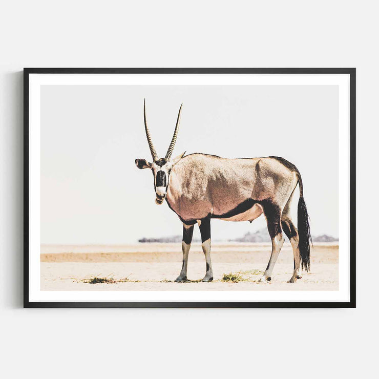 Print Workshop, Framed Print, Oryx, Box Frame, Black Smooth Coating with White Border