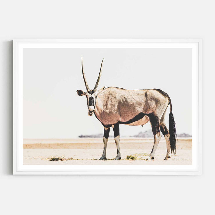 Print Workshop, Framed Print, Oryx, Box Frame, White Smooth Coating with White Border
