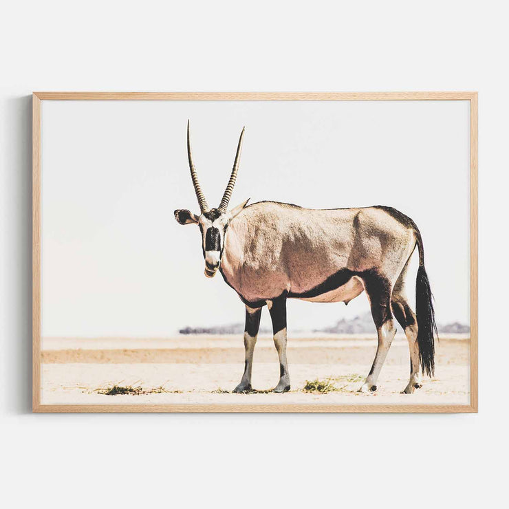 Print Workshop, Framed Print, Oryx, Natural Australian Oak Box Frame, No White Border