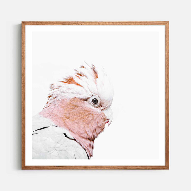 Print Workshop, Framed Print (Square Size), Rosie The Peach Cockatoo, Natural Oak Box Frame, Chestnut Stain with White Border