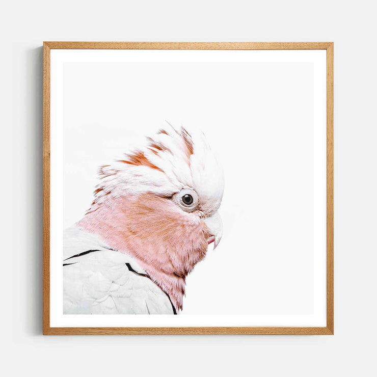 Print Workshop, Framed Print (Square Size), Rosie The Peach Cockatoo, Natural Oak Box Frame, Light Oak Stain with White Border