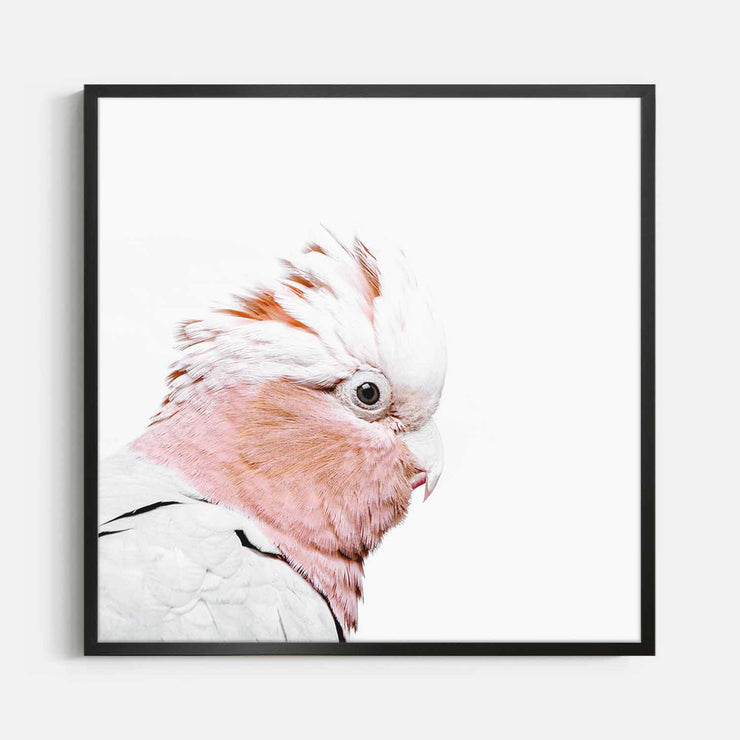 Print Workshop, Framed Print (Square Size), Rosie The Peach Cockatoo, Box Frame, Black Smooth Coating, No White Border