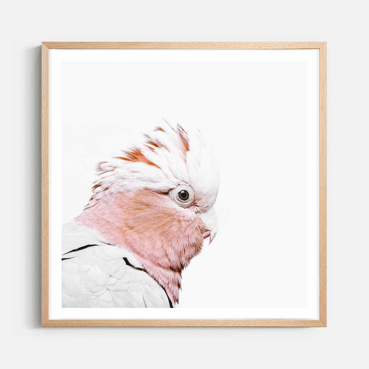 Print Workshop, Framed Print (Square Size), Rosie The Peach Cockatoo, Natural Australian Oak Box Frame with White Border