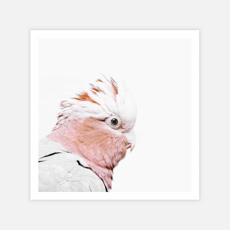 Print Workshop, Rosie The Peach Cockatoo, Print Only (Square Size) No Frame with White Border