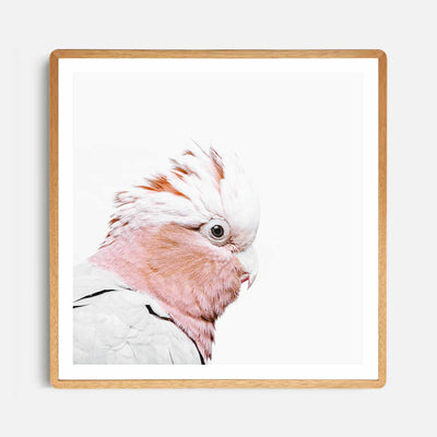 Print Workshop, Framed Print (Square Size), Rosie The Peach Cockatoo, Rounded Corner Natural Oak Box Frame, Light Oak Stain with White Border