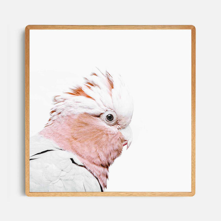 Print Workshop, Framed Print (Square Size), Rosie The Peach Cockatoo, Rounded Corner Natural Oak Box Frame, Light Oak Stain, No White Border