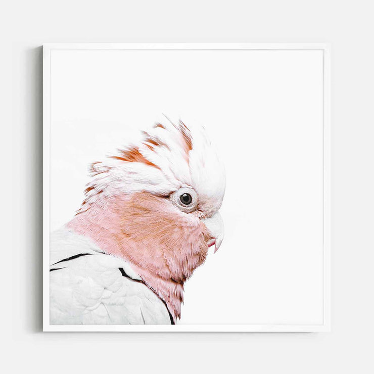 Print Workshop, Framed Print (Square Size), Rosie The Peach Cockatoo, Box Frame, White Smooth Coating, No White Border