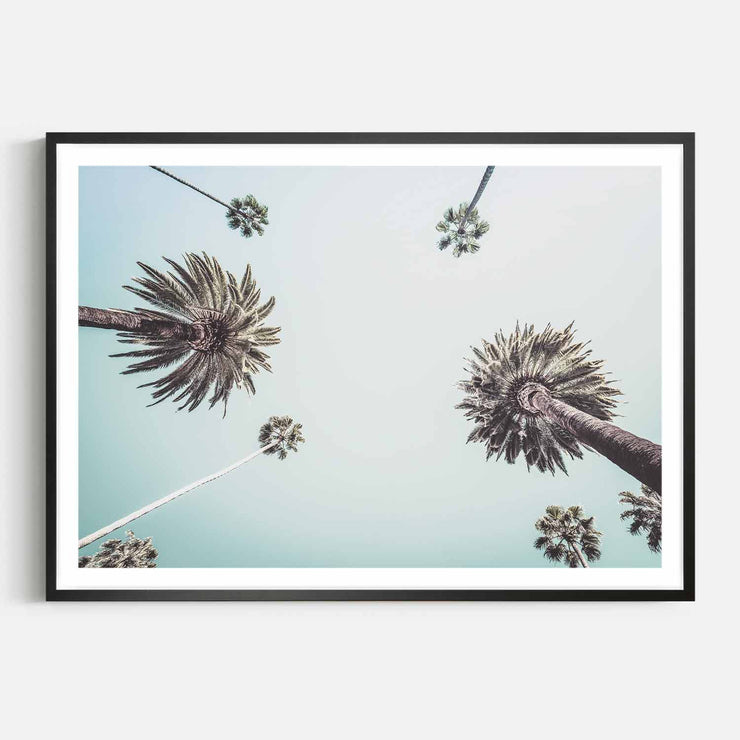 Print Workshop, Framed Print, Summer Palm Tree, Box Frame, Black Smooth Coating with White Border