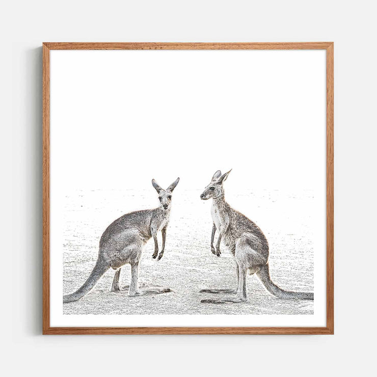 Print Workshop, Framed Print (Square Size), Two Beach Kangaroos, Natural Oak Box Frame, Chestnut Stain with White Border