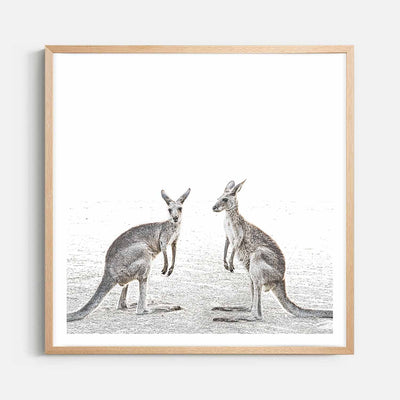 Print Workshop, Framed Print (Square Size), Two Beach Kangaroos, Natural Australian Oak Box Frame with White Border