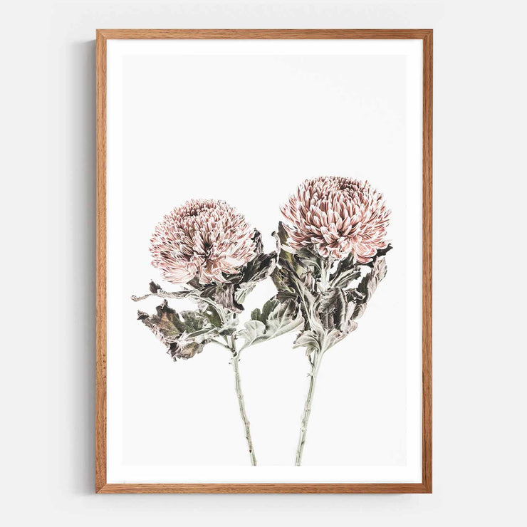 Print Workshop, Framed Print, Vintage Floral #6, Natural Oak Box Frame, Chestnut Stain with White Border