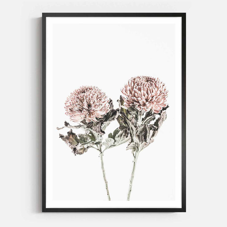 Print Workshop, Framed Print, Vintage Floral #6, Box Frame, Black Smooth Coating with White Border