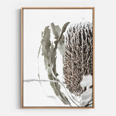 Print Workshop, Canvas Print, Banksia Flora, Natural Australian Oak Floating Frame