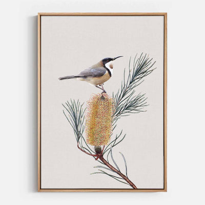 Print Workshop, Canvas Print, Eastern Spinebill, Natural Australian Oak Floating Frame