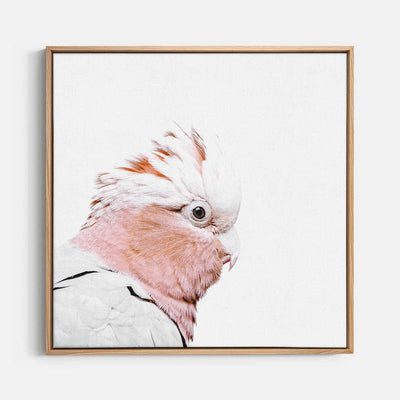 Print Workshop, Canvas Print (Square Size), Rosie The Peach Cockatoo, Natural Australian Oak Floating Frame