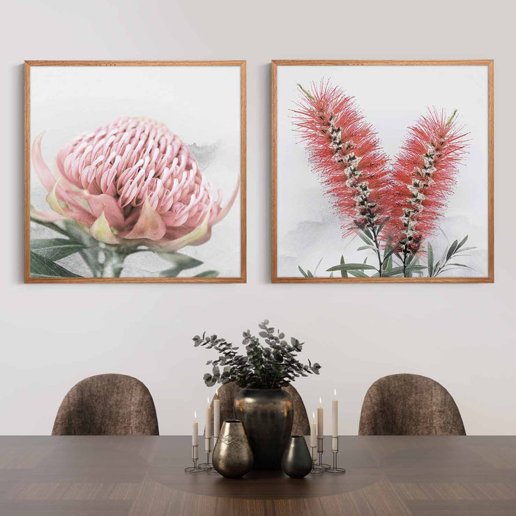 Blooming Waratah & Native Bottle Brush Framed Print Mockup