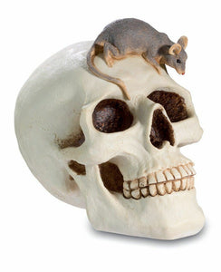 Fabulous Large Skull and Rat Money Box Gothic Figure Ornament Sculpture