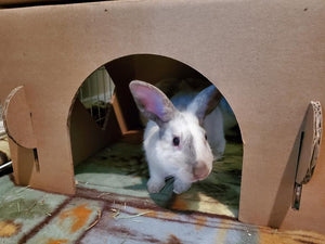 Cardboard Bunny And Kitty Cat  Castle House