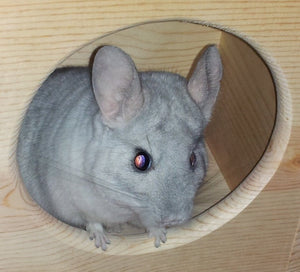 Custom chinchilla house