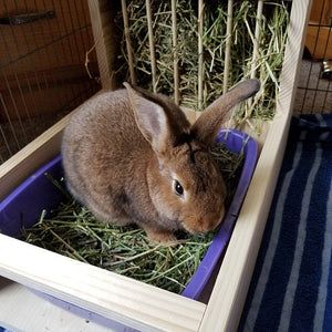 Rabbit Hay Feeder With Litter Box, dowel model