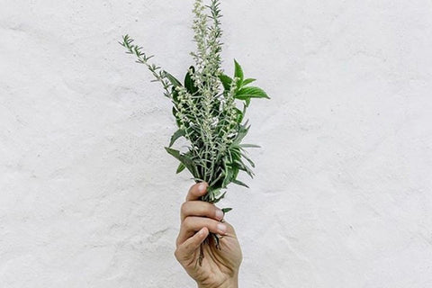 Healthy hands holding herbs