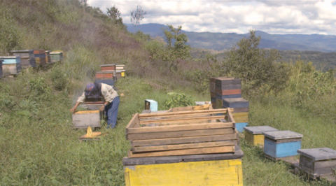 honey farmers in Mexico