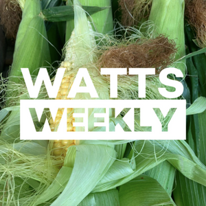 Watts Weekly-  03/08