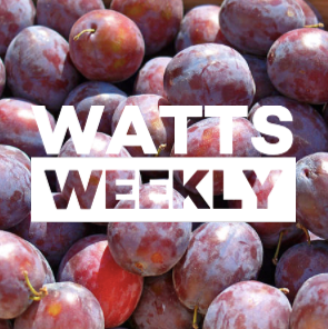 Watts Weekly 10/08