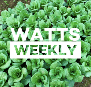Watts Weekly 17/08