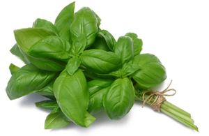 Basil 40g-Watts Farms