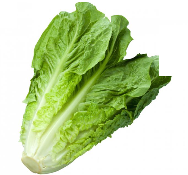 Cos / Romaine Lettuce - Each