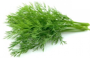 Dill 40g-Watts Farms