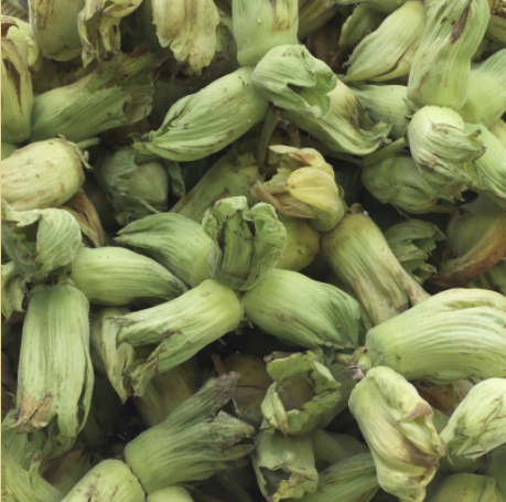 Fresh Kentish Cobnuts - 500g