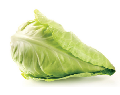 Cabbage Pointed - Each