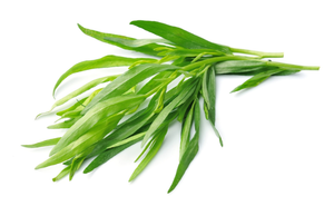 Tarragon 40g-Watts Farms