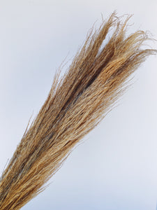 Pampas Grass- Dried