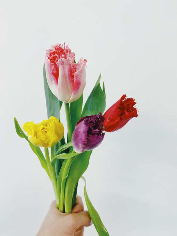 Novelty Tulips