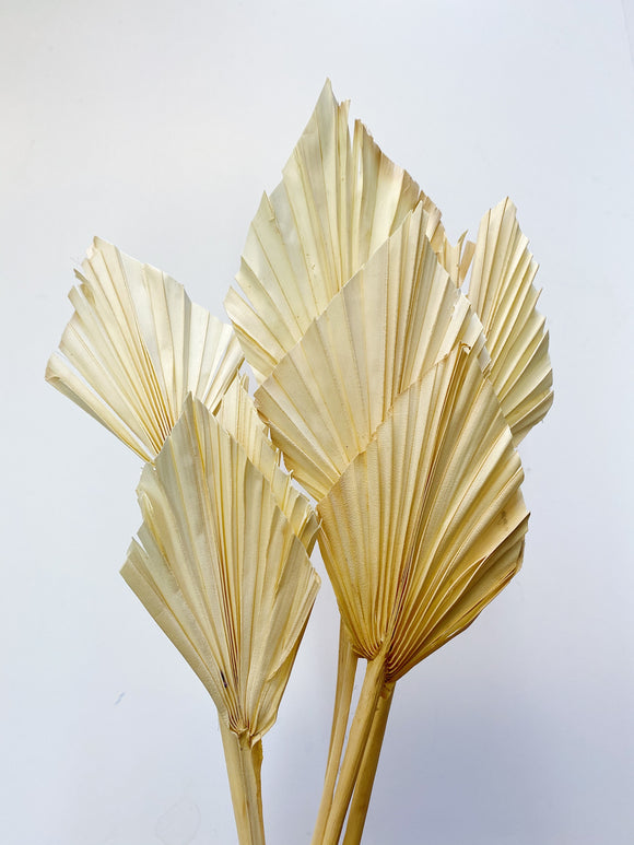 Bleached Palm Spears