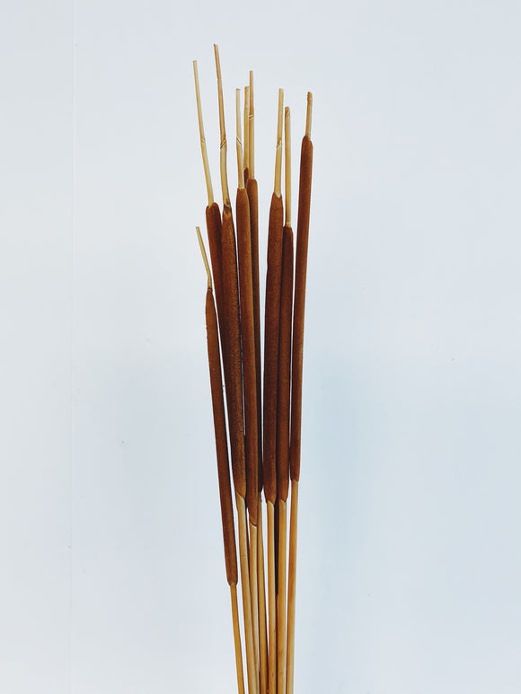 Pencil Cattails