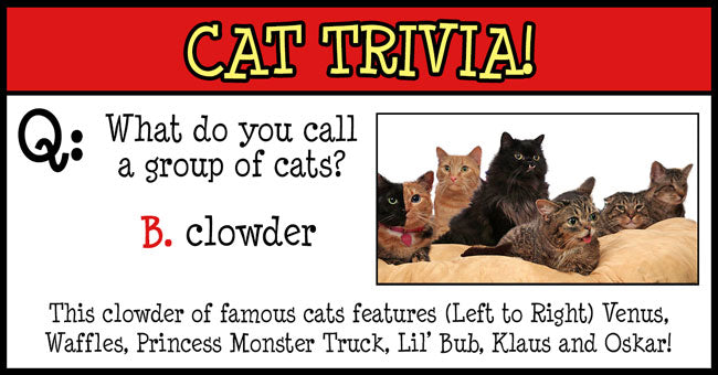 Cat Trivia. What do you call a group of cats? The answer is B. clowder. This clowder of famous cats features (left to right) Venus, Waffles, Princess Monster Truck, Lil' Bub, Klaus and Oskar!