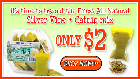 All natural Silver Vine + Catnip mix. Only $2.