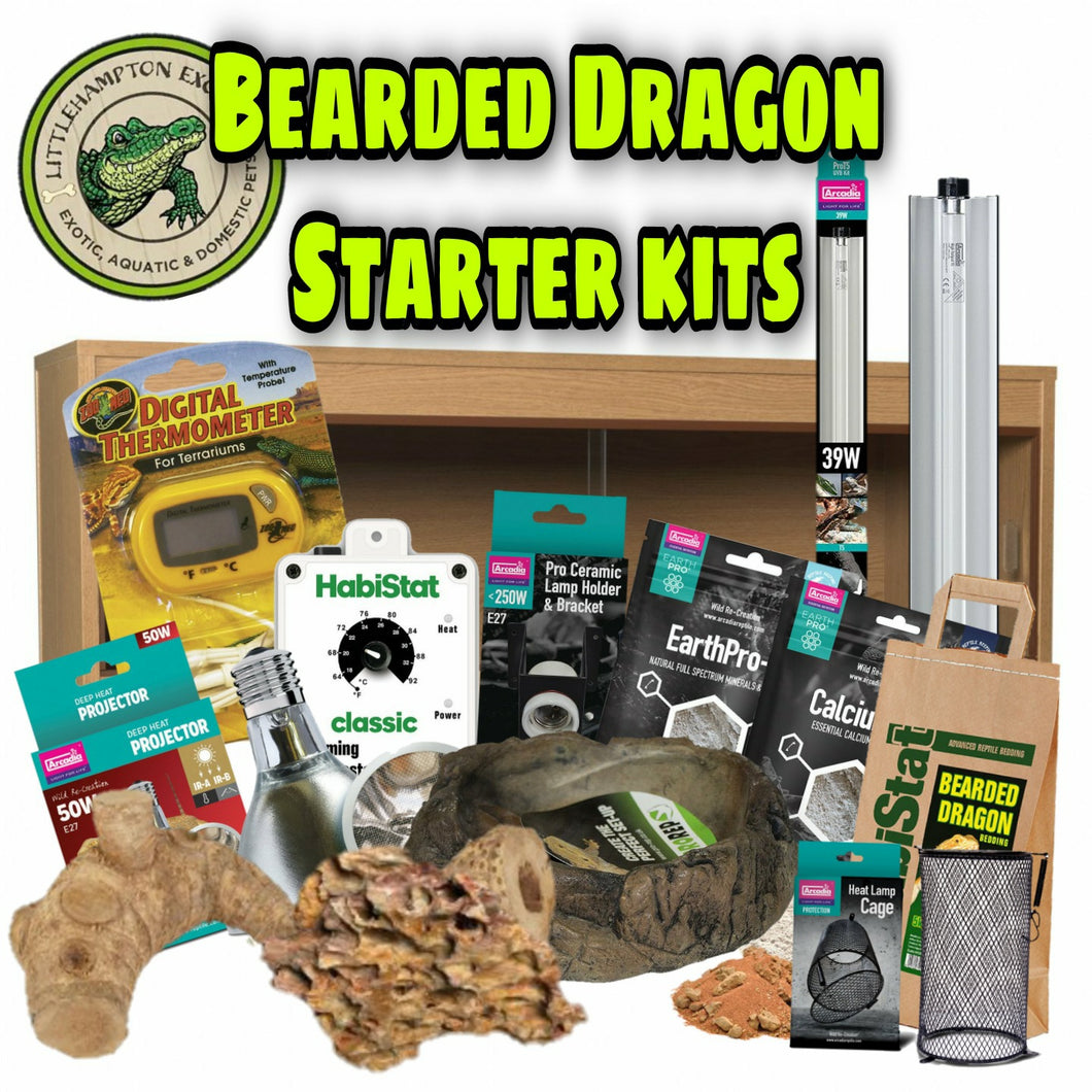 Bearded Dragon Starter Kit - Littlehampton Exotics