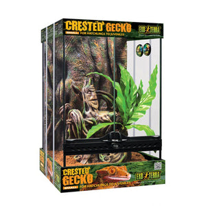 Exo Terra Crested Gecko Kit - Littlehampton Exotics
