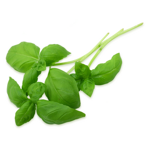 Fresh Basil - HGFD Produce